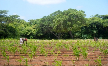 A new partnership seeks to improve climate services and protect agriculture in Mozambique